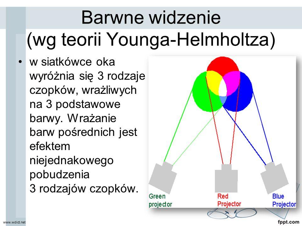 Barwne widzenie (wg teorii Younga-Helmholtza) w siatkówce oka wyróżnia się 3 rodzaje czopków, wrażliwych na 3 podstawowe barwy. Wrażanie barw pośredni