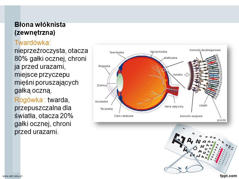 Błona włóknista (zewnętrzna) Twardówka: nieprzeźroczysta, otacza 80% gałki ocznej, chroni ja przed urazami, miejsce przyczepu mięśni poruszających gał