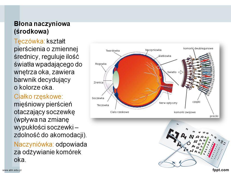 Błona naczyniowa (środkowa) Tęczówka: kształt pierścienia o zmiennej średnicy, reguluje ilość światła wpadającego do wnętrza oka, zawiera barwnik decy