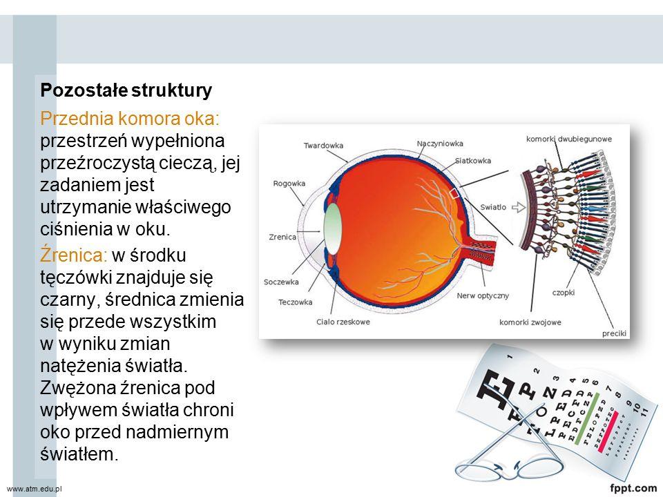 Pozostałe struktury Przednia komora oka: przestrzeń wypełniona przeźroczystą cieczą, jej zadaniem jest utrzymanie właściwego ciśnienia w oku. Źrenica: