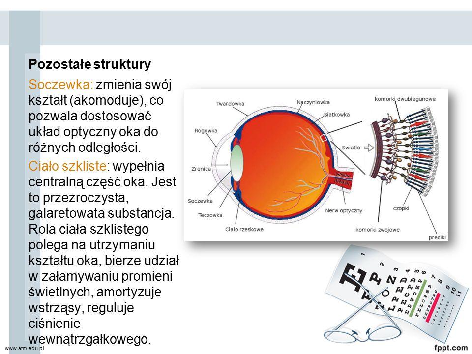 Pozostałe struktury Soczewka: zmienia swój kształt (akomoduje), co pozwala dostosować układ optyczny oka do różnych odległości. Ciało szkliste: wypełn
