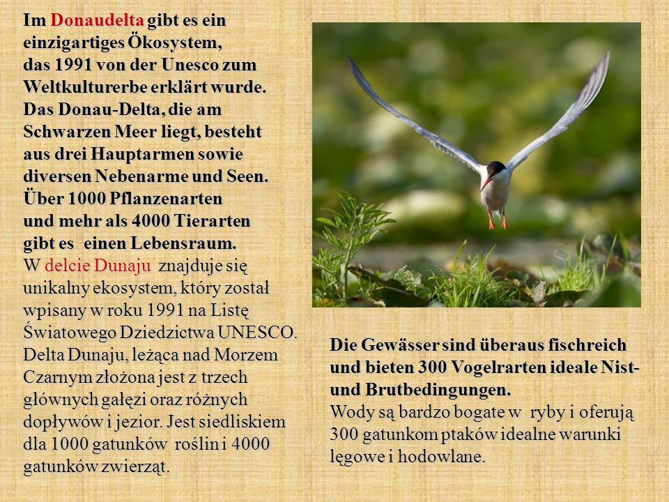 Im Donaudelta gibt es ein einzigartiges Ökosystem, das 1991 von der Unesco zum Weltkulturerbe erklärt wurde. Das Donau-Delta, die am Schwarzen Meer li