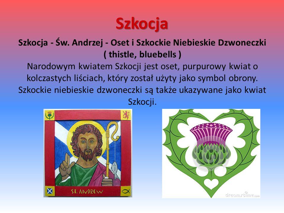 Szkocja Szkocja - Św. Andrzej - Oset i Szkockie Niebieskie Dzwoneczki ( thistle, bluebells ) Narodowym kwiatem Szkocji jest oset, purpurowy kwiat o ko