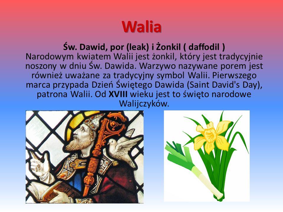 Walia Św. Dawid, por (leak) i Żonkil ( daffodil ) Narodowym kwiatem Walii jest żonkil, który jest tradycyjnie noszony w dniu Św. Dawida. Warzywo nazyw