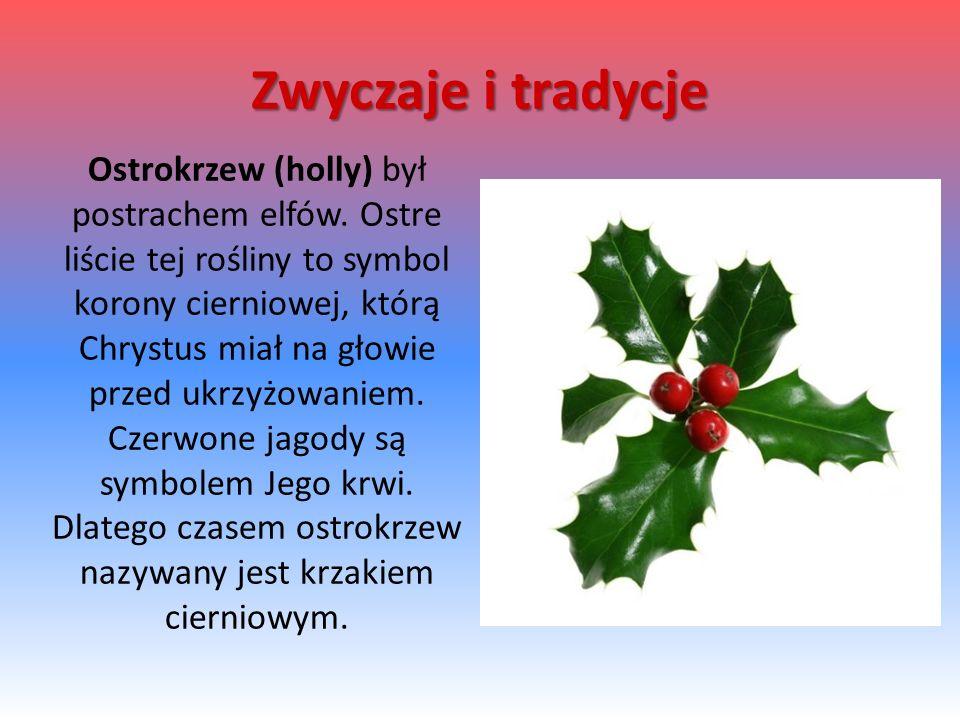 Ostrokrzew (holly) był postrachem elfów. Ostre liście tej rośliny to symbol korony cierniowej, którą Chrystus miał na głowie przed ukrzyżowaniem. Czer