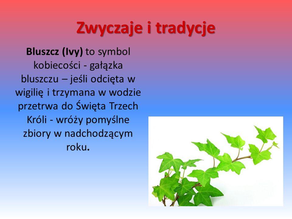Bluszcz (Ivy) to symbol kobiecości - gałązka bluszczu – jeśli odcięta w wigilię i trzymana w wodzie przetrwa do Święta Trzech Króli - wróży pomyślne z