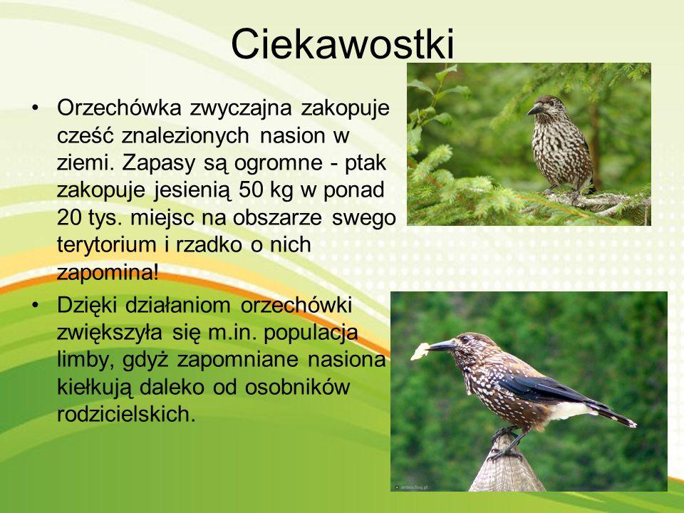Gatunek średniego ptaka z rodziny krukowatych. Zamieszkuje większość Europy, i zachodnią część Azji. W Polsce niezbyt liczny ptak lęgowy. Orzechówka j