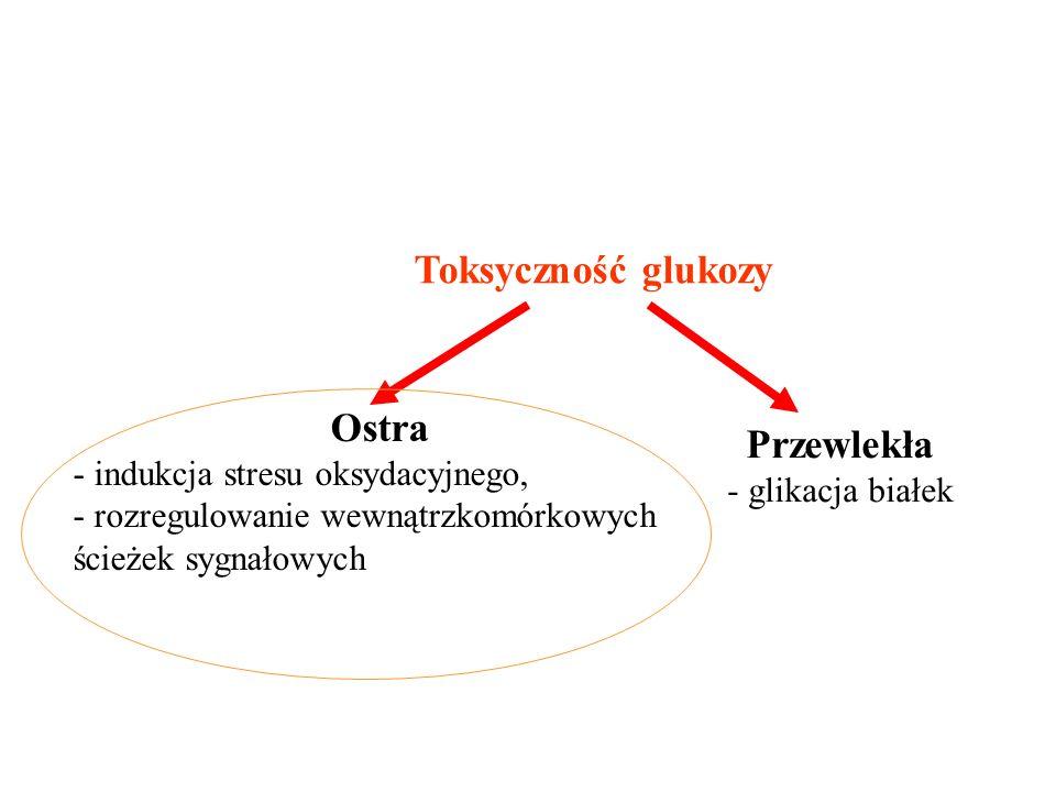 Toksyczność glukozy Ostra - indukcja stresu oksydacyjnego, - rozregulowanie wewnątrzkomórkowych ścieżek sygnałowych Przewlekła - glikacja białek