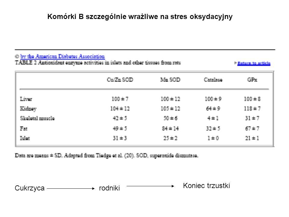 Komórki B szczególnie wrażliwe na stres oksydacyjny Cukrzycarodniki Koniec trzustki