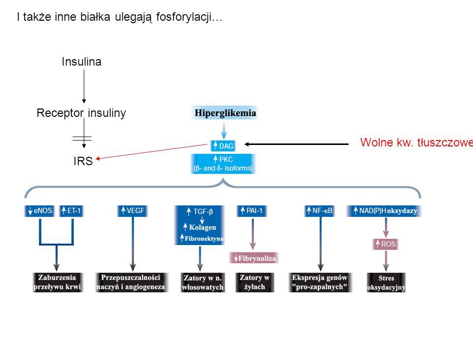 I także inne białka ulegają fosforylacji… Insulina Receptor insuliny IRS