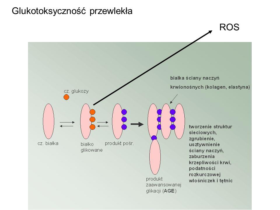 ROS Glukotoksyczność przewlekła