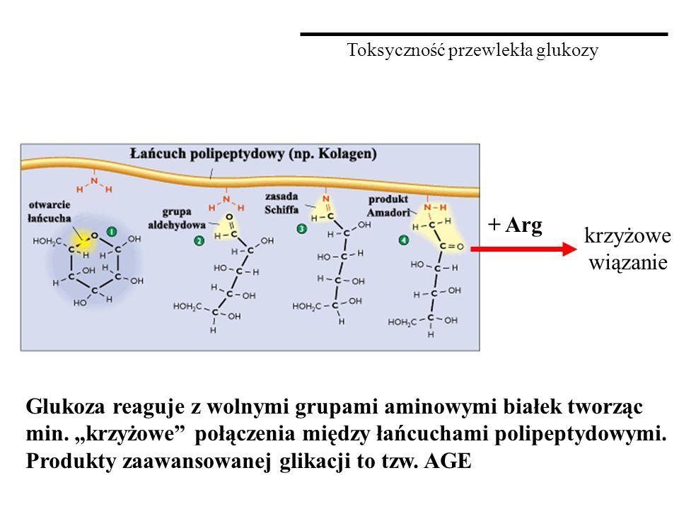 """Toksyczność przewlekła glukozy Glukoza reaguje z wolnymi grupami aminowymi białek tworząc min. """"krzyżowe"""" połączenia między łańcuchami polipeptydowymi"""