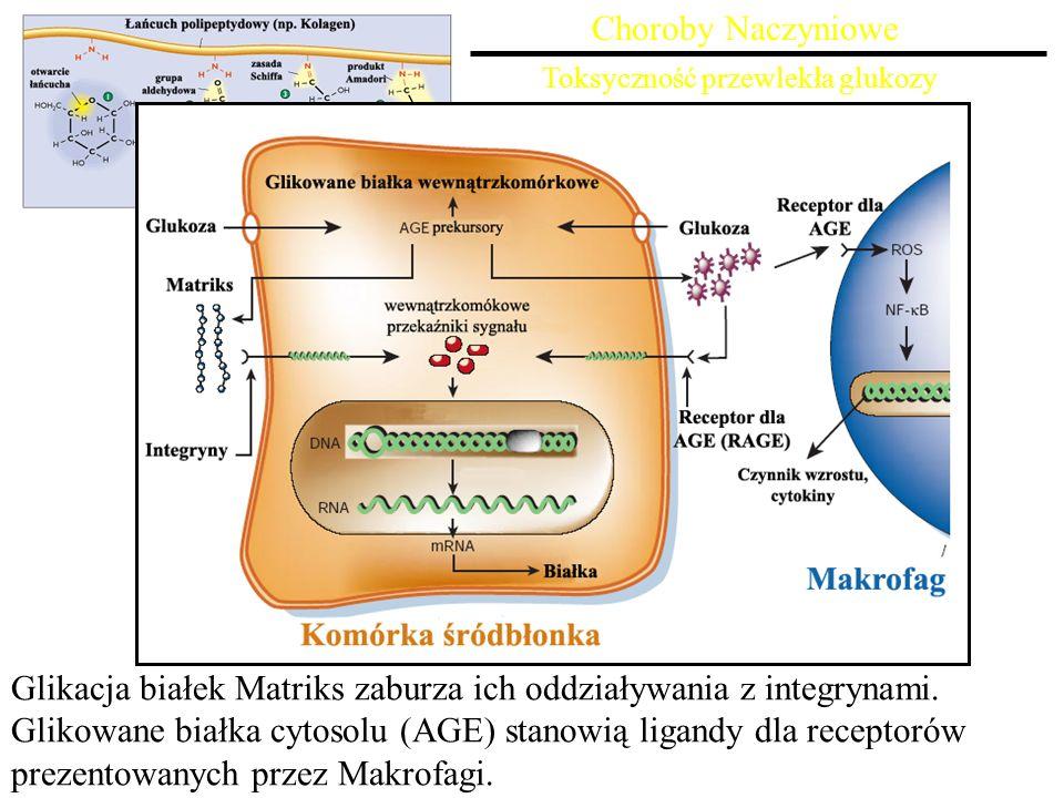Choroby Naczyniowe Toksyczność przewlekła glukozy Glikacja białek Matriks zaburza ich oddziaływania z integrynami. Glikowane białka cytosolu (AGE) sta