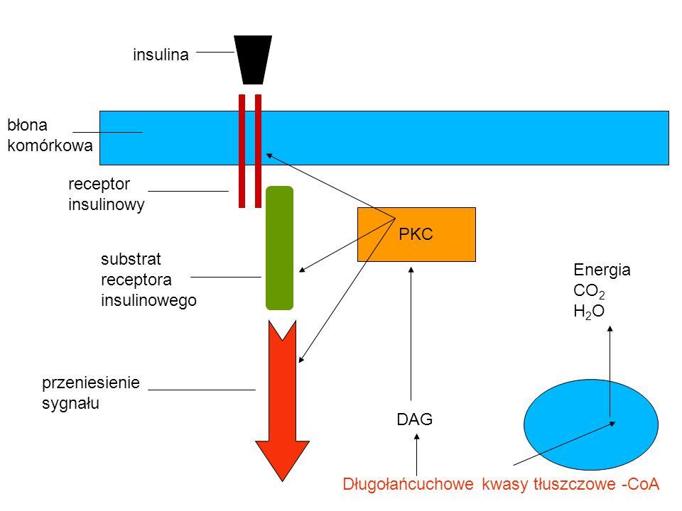 insulina błona komórkowa receptor insulinowy substrat receptora insulinowego Długołańcuchowe kwasy tłuszczowe -CoA przeniesienie sygnału Energia CO 2
