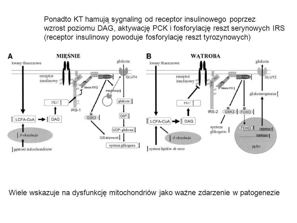 Ponadto KT hamują sygnaling od receptor insulinowego poprzez wzrost poziomu DAG, aktywację PCK i fosforylację reszt serynowych IRS (receptor insulinow