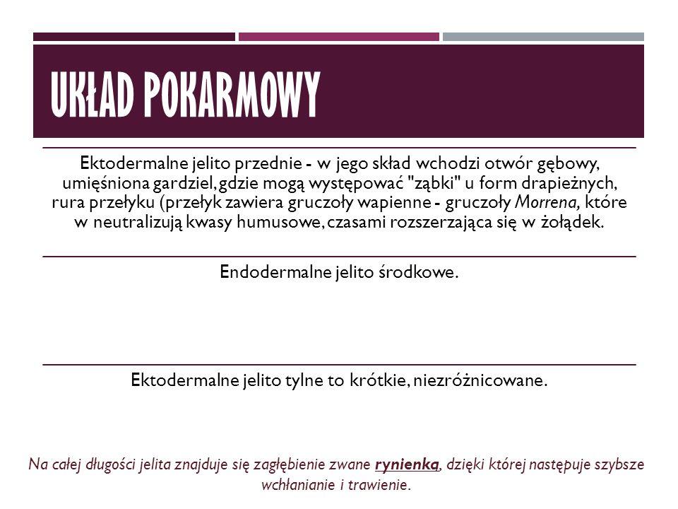 UKŁAD POKARMOWY http://invertebrata.cba.pl