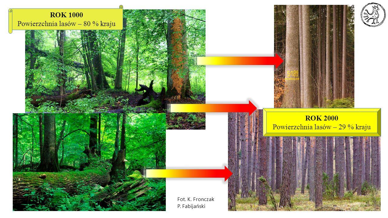 ROK 1000 Powierzchnia lasów – 80 % kraju ROK 2000 Powierzchnia lasów – 29 % kraju Fot. K. Fronczak P. Fabijański