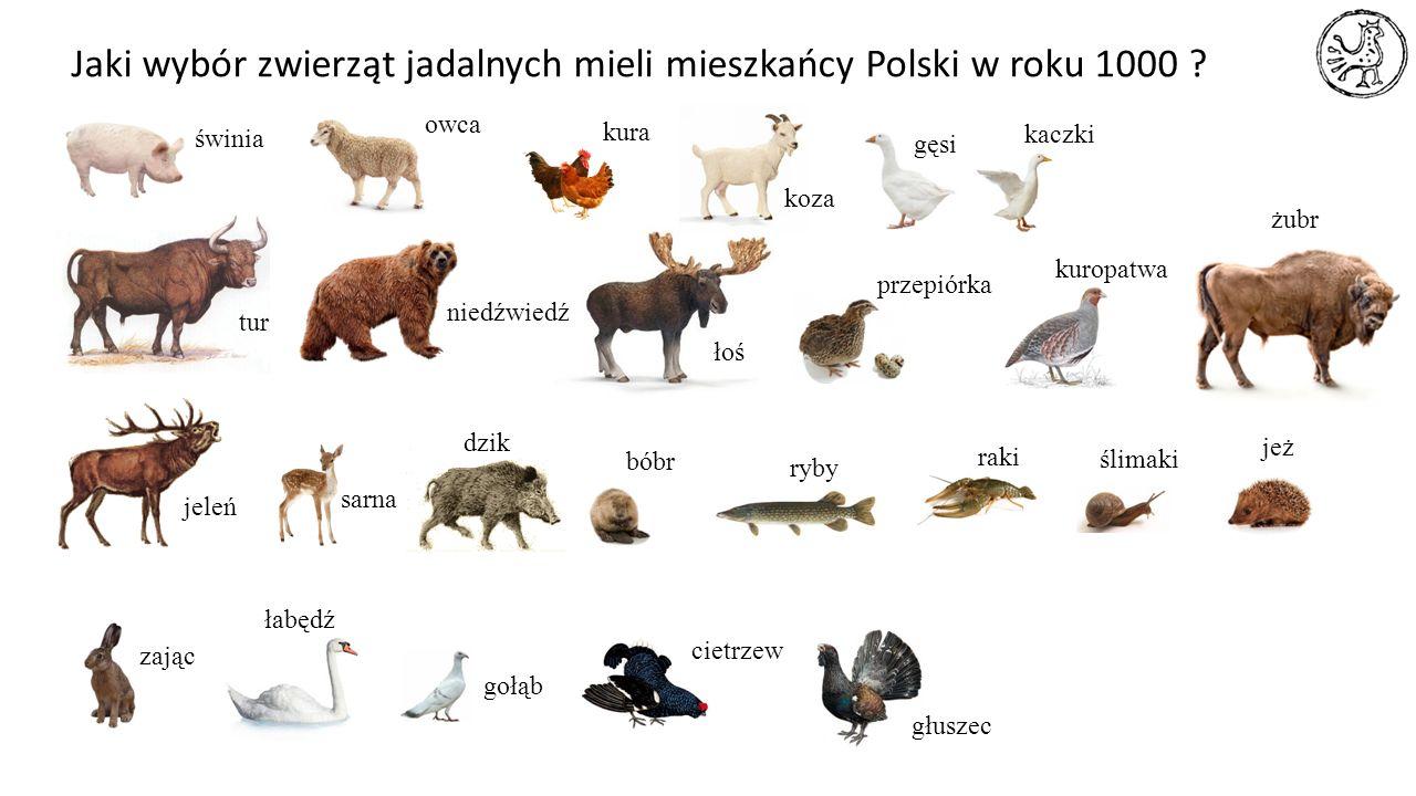 Jaki wybór zwierząt jadalnych mieli mieszkańcy Polski w roku 1000 ? świnia owca kura koza gęsi kaczki tur niedźwiedź łoś przepiórka kuropatwa jeleń sa