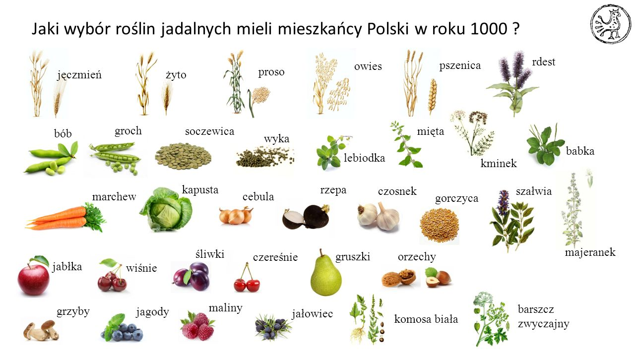Jaki wybór roślin jadalnych mieli mieszkańcy Polski w roku 1000 ? jęczmieńżyto proso owies pszenica bób soczewica wyka marchew kapusta cebula rzepa ja