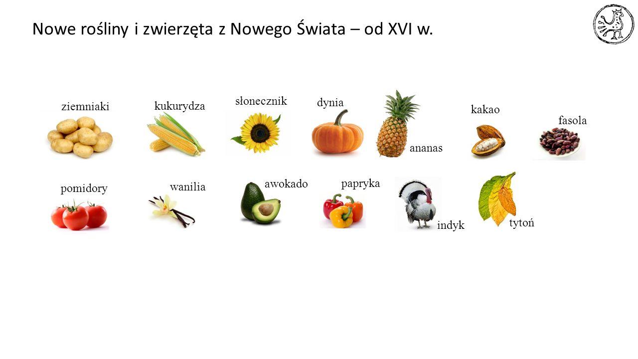 ziemniaki słonecznik dynia kukurydza ananas kakao fasola pomidory wanilia awokado papryka indyk tytoń Nowe rośliny i zwierzęta z Nowego Świata – od XV