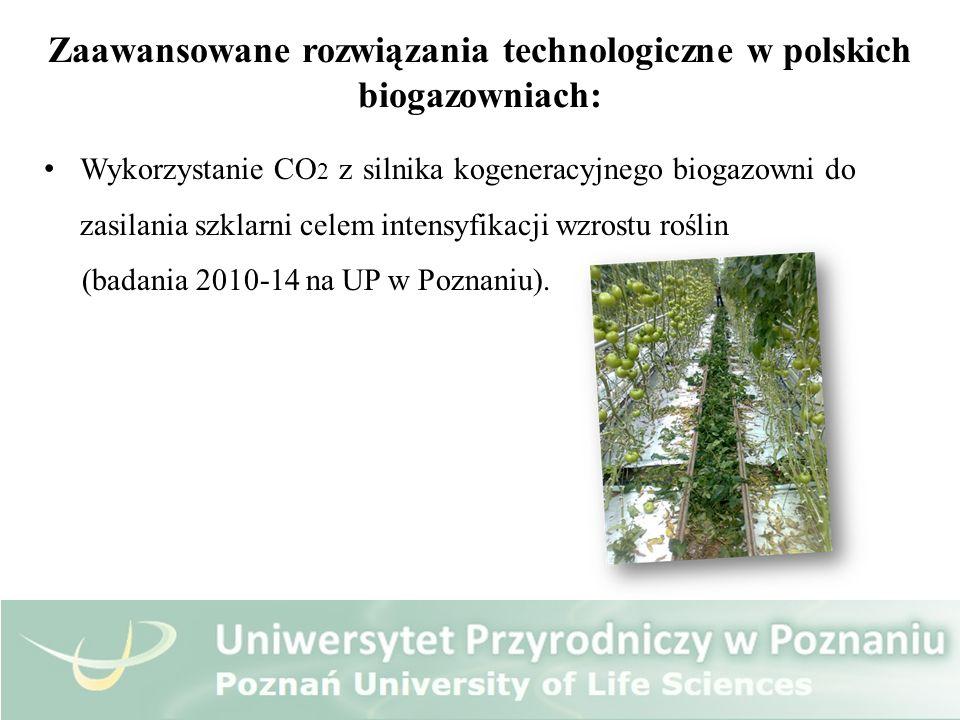 Zaawansowane rozwiązania technologiczne w polskich biogazowniach: Wykorzystanie CO 2 z silnika kogeneracyjnego biogazowni do zasilania szklarni celem