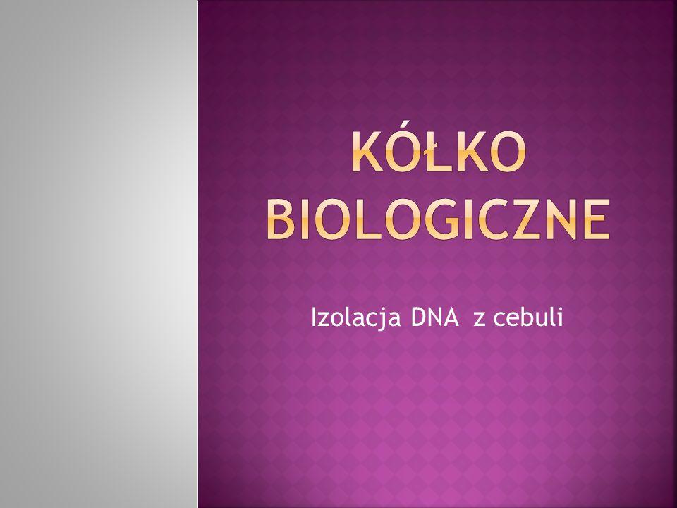 Izolacja DNA z cebuli