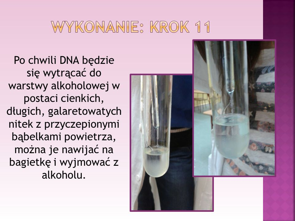 Po chwili DNA będzie się wytrącać do warstwy alkoholowej w postaci cienkich, długich, galaretowatych nitek z przyczepionymi bąbelkami powietrza, można