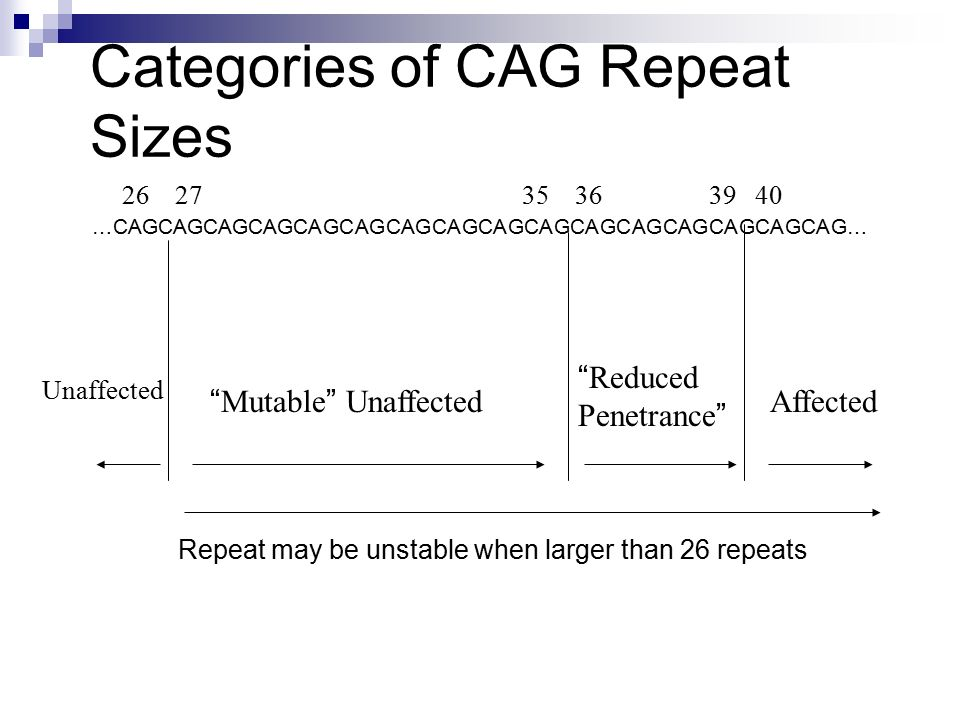 "Categories of CAG Repeat Sizes …CAGCAGCAGCAGCAGCAGCAGCAGCAGCAGCAGCAGCAGCAGCAGCAG… 26 27 35 36 39 40 Unaffected "" Mutable "" Unaffected "" Reduced Penetr"