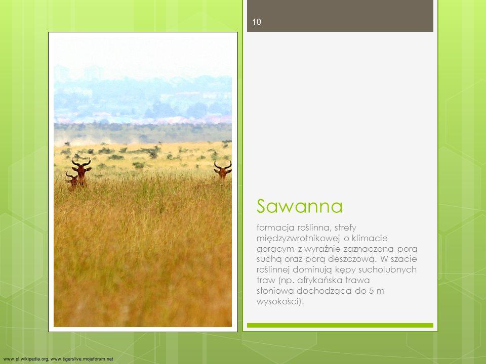 Sawanna formacja roślinna, strefy międzyzwrotnikowej o klimacie gorącym z wyraźnie zaznaczoną porą suchą oraz porą deszczową. W szacie roślinnej domin