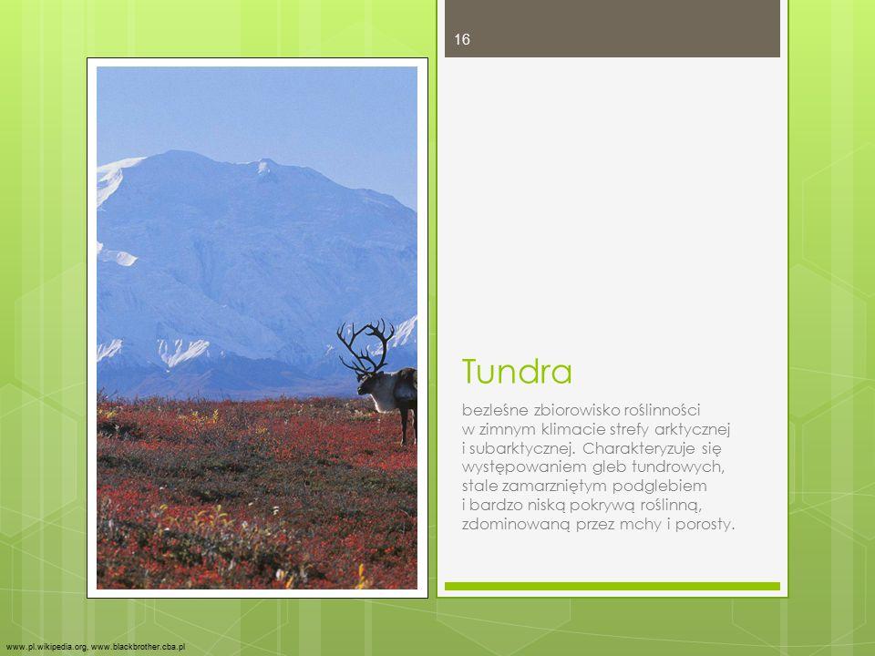 Tundra bezleśne zbiorowisko roślinności w zimnym klimacie strefy arktycznej i subarktycznej. Charakteryzuje się występowaniem gleb tundrowych, stale z