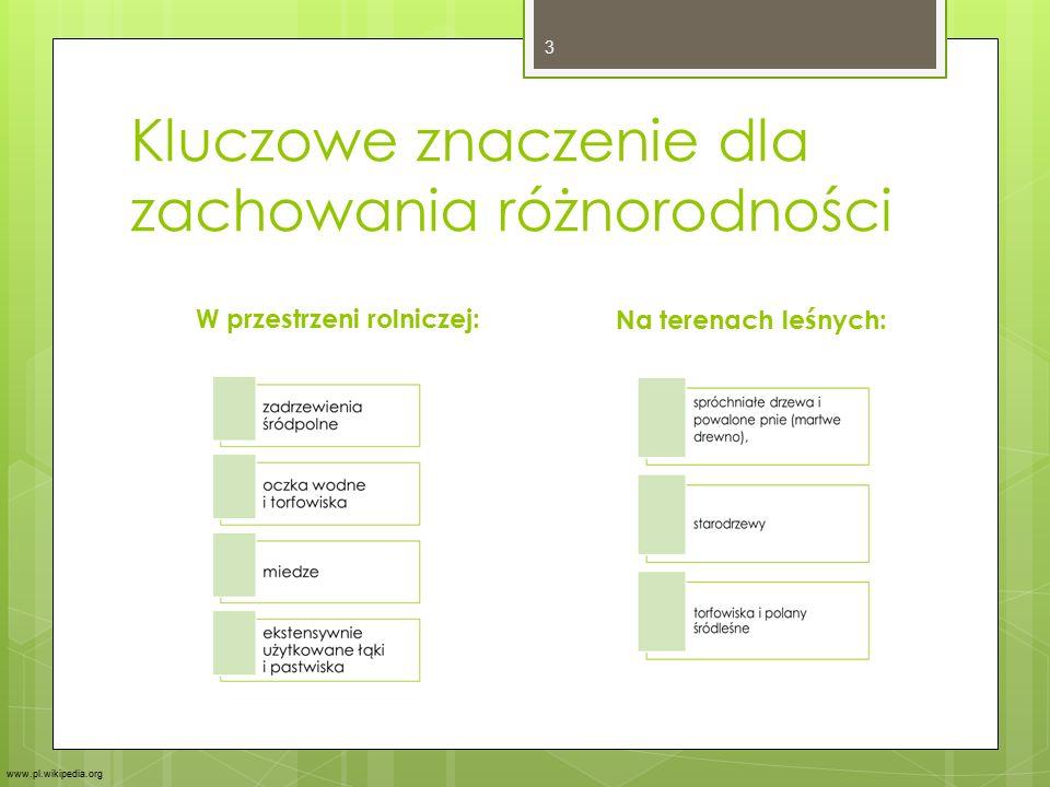 Kluczowe znaczenie dla zachowania różnorodności W przestrzeni rolniczej:Na terenach leśnych: 3 www.pl.wikipedia.org