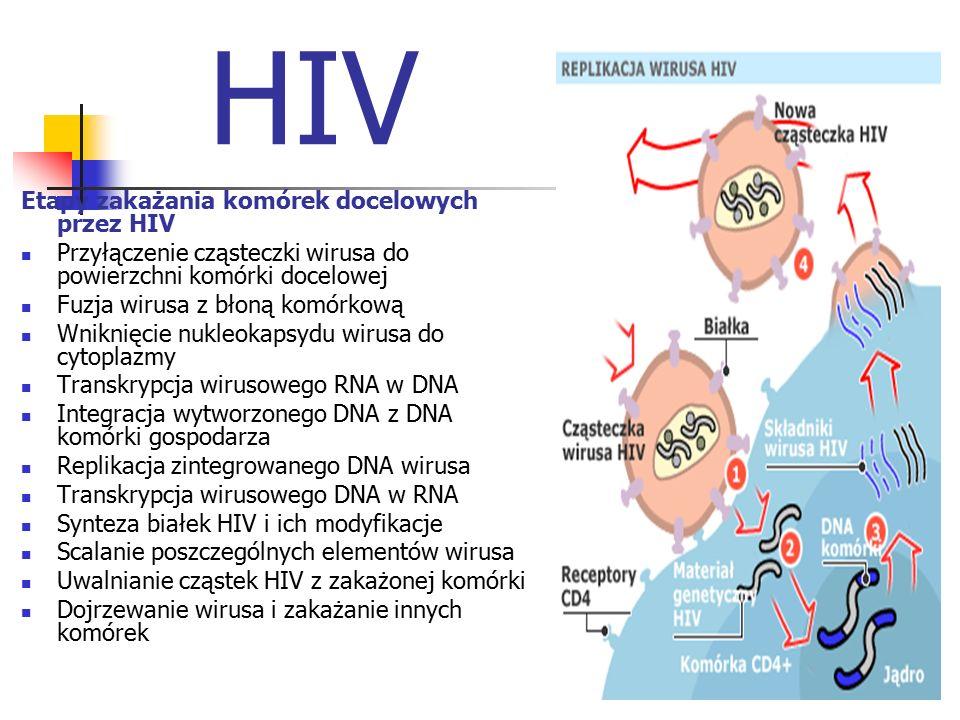 HIV Etapy zakażania komórek docelowych przez HIV Przyłączenie cząsteczki wirusa do powierzchni komórki docelowej Fuzja wirusa z błoną komórkową Wnikni