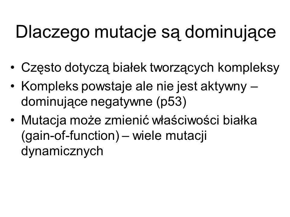 Dlaczego mutacje są dominujące Często dotyczą białek tworzących kompleksy Kompleks powstaje ale nie jest aktywny – dominujące negatywne (p53) Mutacja