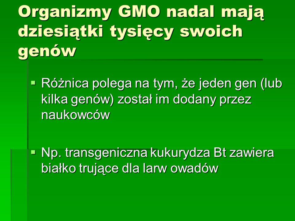 Organizmy GMO nadal mają dziesiątki tysięcy swoich genów  Różnica polega na tym, że jeden gen (lub kilka genów) został im dodany przez naukowców  Np.