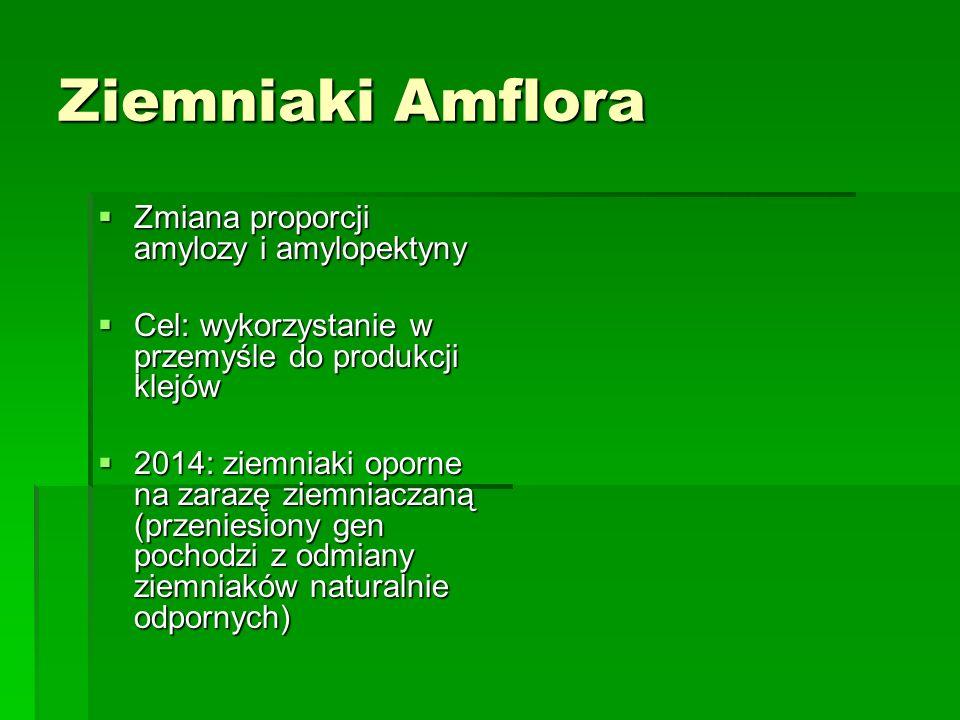 Ziemniaki Amflora  Zmiana proporcji amylozy i amylopektyny  Cel: wykorzystanie w przemyśle do produkcji klejów  2014: ziemniaki oporne na zarazę ziemniaczaną (przeniesiony gen pochodzi z odmiany ziemniaków naturalnie odpornych)