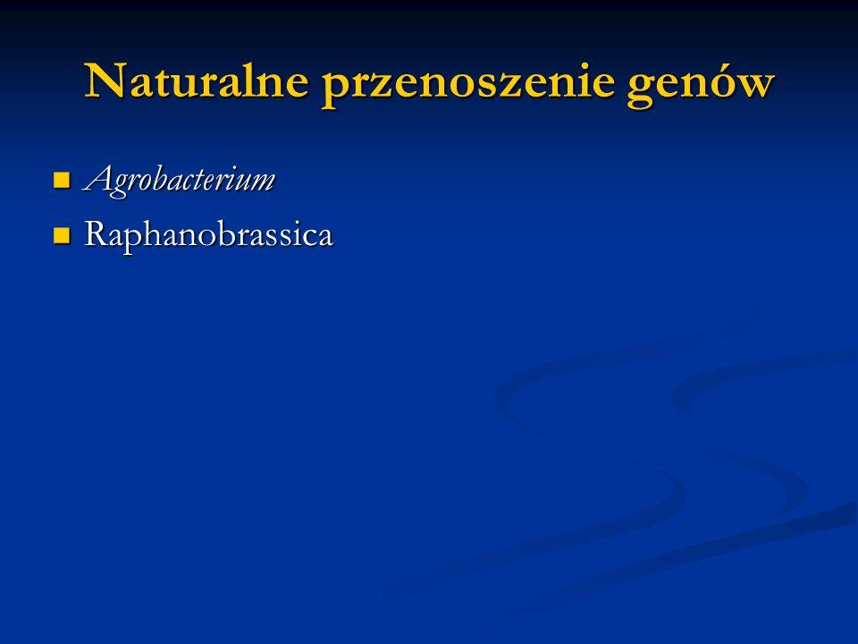 Naturalne przenoszenie genów Agrobacterium Agrobacterium Raphanobrassica Raphanobrassica
