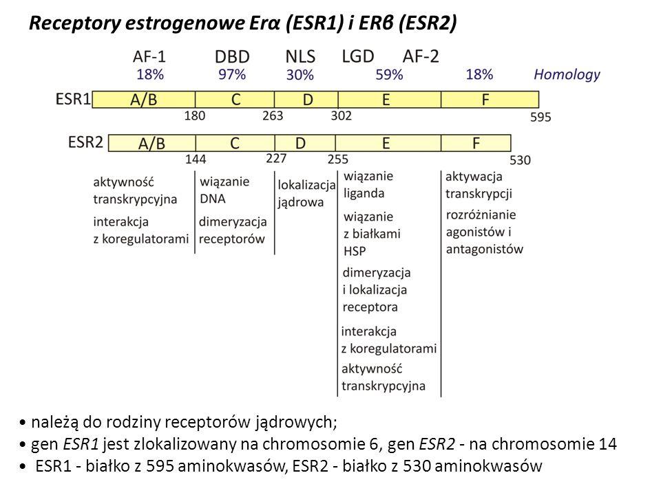 Receptory estrogenowe Erα (ESR1) i ERβ (ESR2) należą do rodziny receptorów jądrowych; gen ESR1 jest zlokalizowany na chromosomie 6, gen ESR2 - na chro