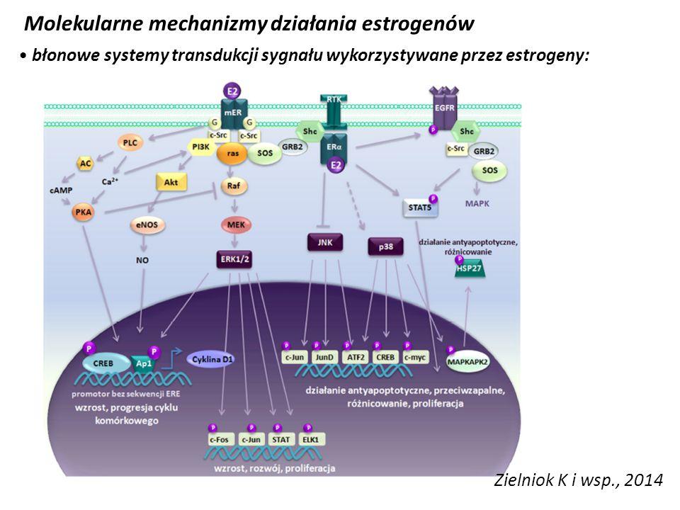 Molekularne mechanizmy działania estrogenów błonowe systemy transdukcji sygnału wykorzystywane przez estrogeny: Zielniok K i wsp., 2014