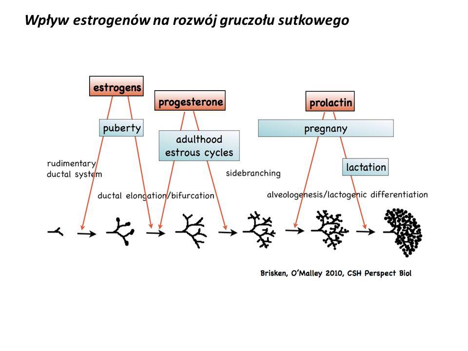 Wpływ estrogenów na rozwój gruczołu sutkowego
