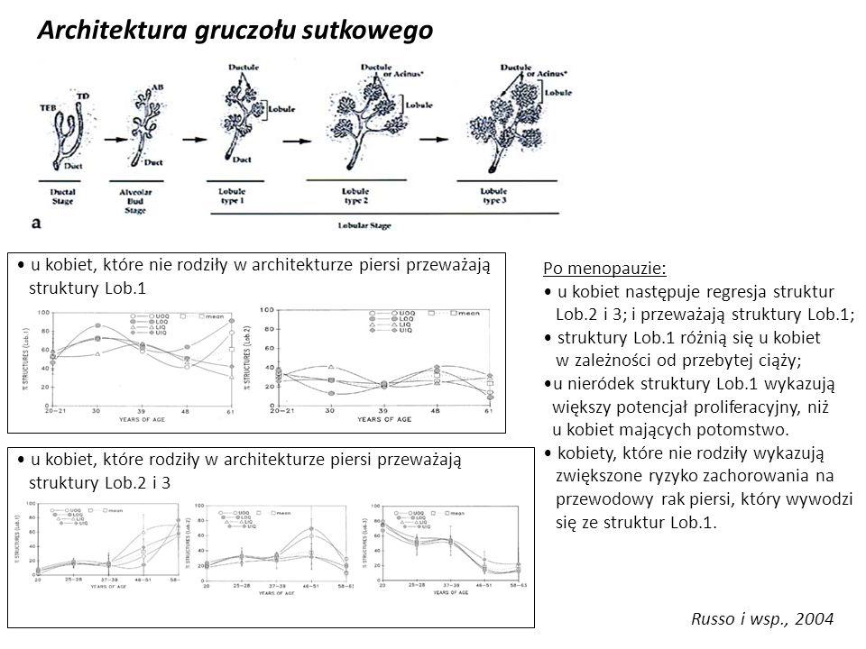Russo i wsp., 2004 Architektura gruczołu sutkowego u kobiet, które nie rodziły w architekturze piersi przeważają struktury Lob.1 u kobiet, które rodzi