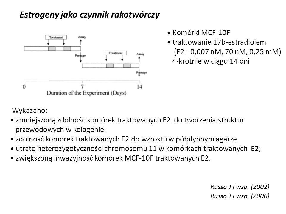 Estrogeny jako czynnik rakotwórczy Russo J i wsp. (2002) Wykazano: zmniejszoną zdolność komórek traktowanych E2 do tworzenia struktur przewodowych w k