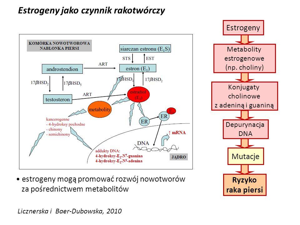 Mutacje Metabolity estrogenowe (np. choliny) Konjugaty cholinowe z adeniną i guaniną Estrogeny jako czynnik rakotwórczy Licznerska i Baer-Dubowska, 20