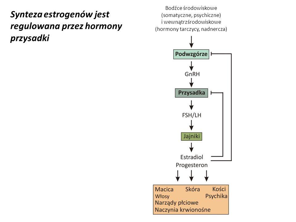 Synteza estrogenów jest regulowana przez hormony przysadki Bodźce środowiskowe (somatyczne, psychiczne) i wewnątrzśrodowiskowe (hormony tarczycy, nadn