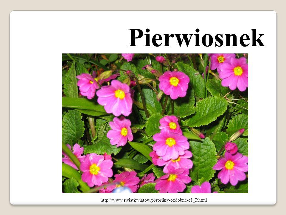 Pierwiosnek http://www.swiatkwiatow.pl/rosliny-ozdobne-c1_P.html