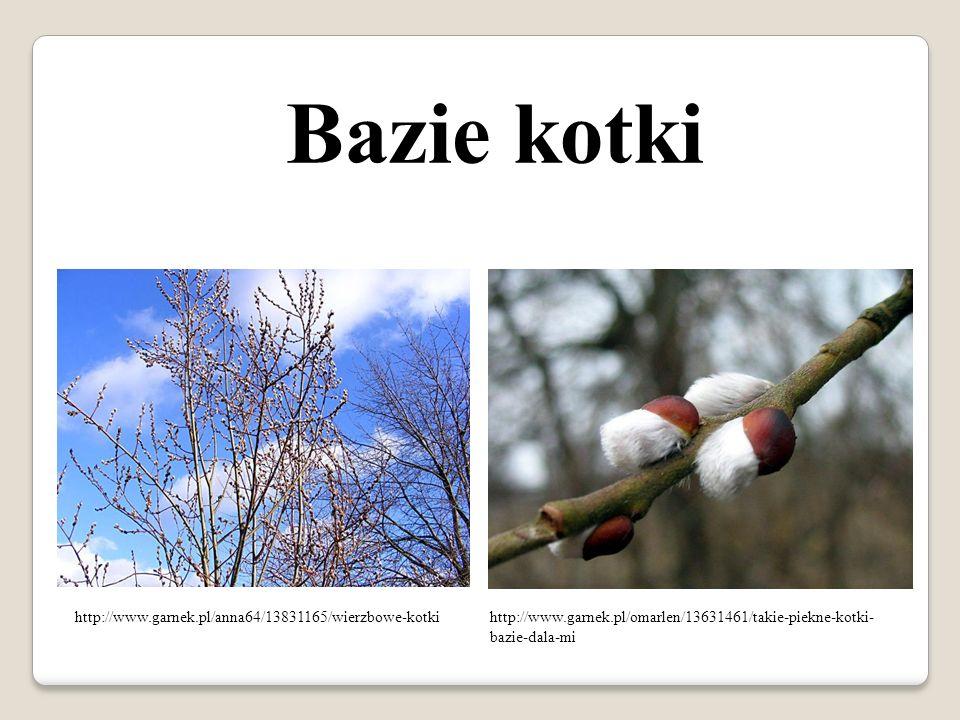 Bazie kotki http://www.garnek.pl/anna64/13831165/wierzbowe-kotkihttp://www.garnek.pl/omarlen/13631461/takie-piekne-kotki- bazie-dala-mi