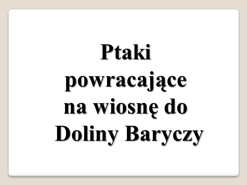 Bocian https://pasjonat.flog.pl/archiwum/tag/bocian