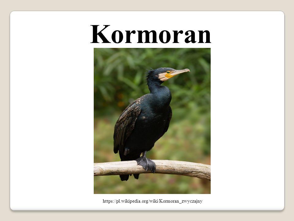 Kormoran https://pl.wikipedia.org/wiki/Kormoran_zwyczajny