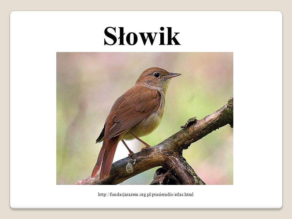 Skowronek http://www.fotoprzyroda.pl/topic/776-skowronek-alauda-arvensis/