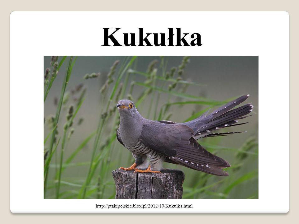 Kukułka http://ptakipolskie.blox.pl/2012/10/Kukulka.html