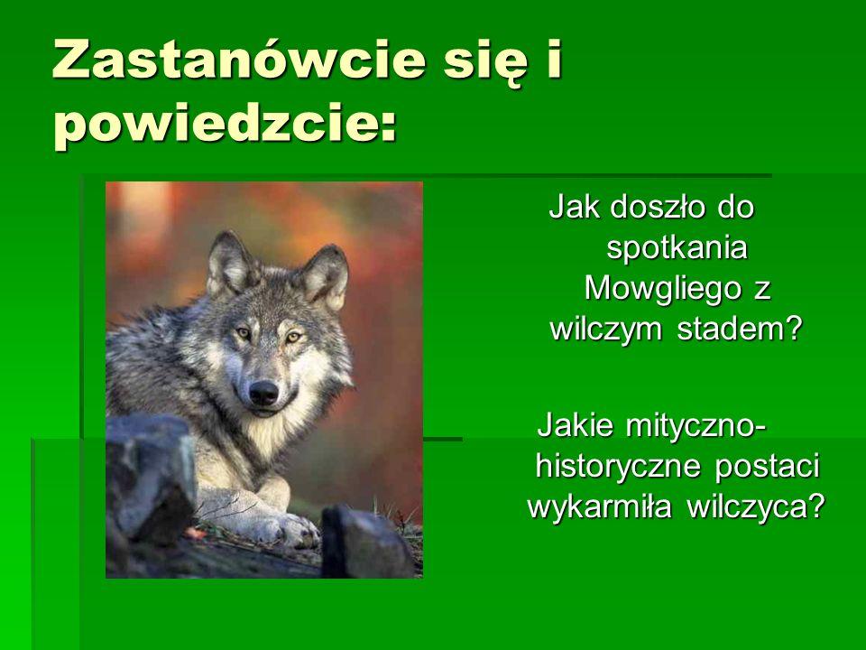 Plan wydarzeń opowieści o Mowglim  Trafienie Mowgliego do jaskini wilków w ucieczce przed tygrysem.  Opieka wilczej Gromady, a także niedźwiedzia Ba